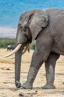 Colpo verticale del primo piano della testa di un elefante carino nel deserto