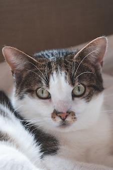 Colpo verticale del primo piano della testa di un simpatico gatto bianco e grigio con gli occhi verdi