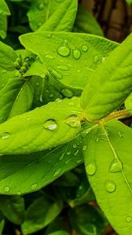 Colpo verticale del primo piano di foglie fresche lussureggianti con le gocce di pioggia