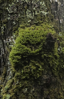 Vertical closeup shot of mossy tree trunk