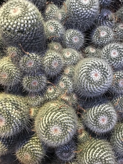 Vertical closeup shot of numerous round green cacti