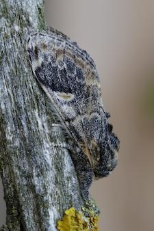 나무 줄기에 위장한 나비의 수직 근접 촬영