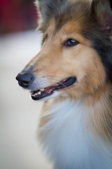 입을 벌리고 긴 머리를 한 귀여운 털복숭이 강아지의 수직 근접 촬영