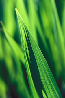 昼間のぼやけた自然な背景と緑の葉の垂直クローズアップショット