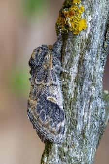 배경이 흐릿한 나무 껍질에 있는 나방의 수직 근접 촬영