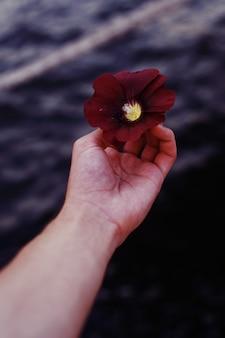 손에 아름다운 붉은 꽃을 들고 사람의 세로 근접 촬영 샷