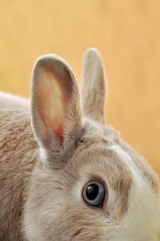 Вертикальный снимок крупным планом глаза кролика с размытым оранжевым фоном