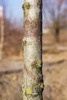 菌類と木の幹の垂直クローズアップショット