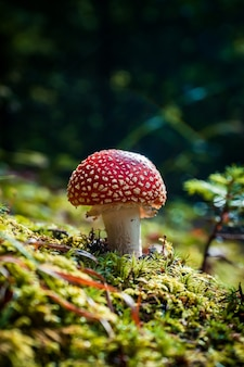 숲에서 자라는 아가릭 버섯의 수직 근접 촬영