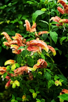 緑の葉を持つ美しいユリズイセン科の花の垂直クローズアップショット