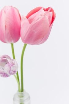 흰색 바탕에 아름 다운 핑크 튤립의 수직 근접 촬영 샷