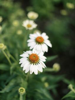 咲く白い円錐形の花の垂直クローズアップショット
