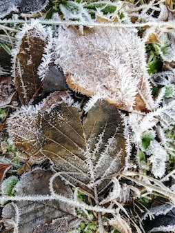 スタバーン、ノルウェーの森で冷凍植物の垂直のクローズアップショット