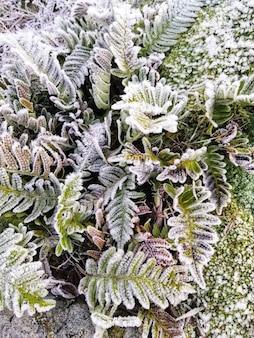 ノルウェー、スタバーンの森の凍った植物の垂直クローズアップショット