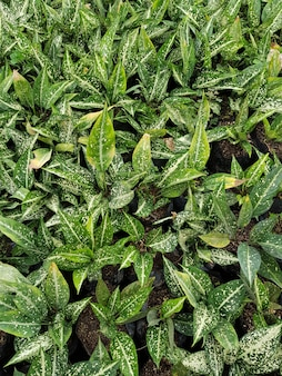 緑の蘭の植物の垂直のクローズアップショット