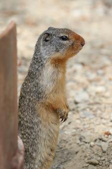 다람쥐의 세로 근접 촬영