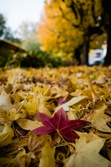 Вертикальный снимок красных и желтых листьев дерева крупным планом, сложенных на земле