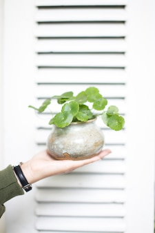Vertical closeup shot of a person holding a green plant in the pot in front of a white door