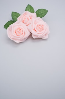 Vertical closeup shot of pink roses isolated on a blue background with copy space
