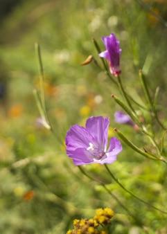Colpo verticale del primo piano di un fiore di enotera viola circondato dal verde