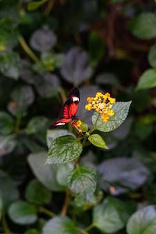 Colpo verticale del primo piano di una farfalla rossa che si siede sul flowe