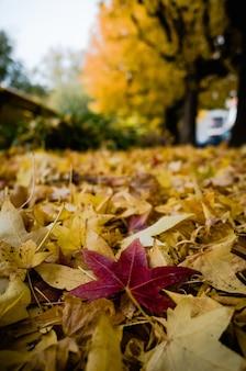 Colpo verticale del primo piano delle foglie degli alberi rossi e gialli ammucchiati sul terreno