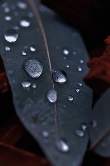 Vertical closeup shot of round water droplets on a green leaf