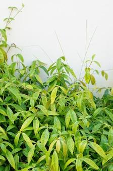 Colpo verticale del primo piano di un piccolo arbusto con foglie verdi davanti a un muro bianco