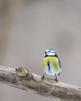 Colpo verticale del primo piano di un piccolo uccello giallo sul ramo di legno con uno sfondo sfocato