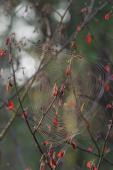 Vertical closeup shot of a spiderweb on a tree branch with a blurred  background