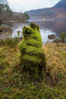 Colpo verticale del primo piano di un moncone coperto di muschio a loch maree, highlands, scozia