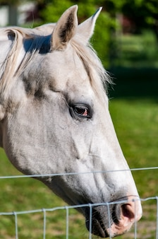 Vertical closeup shot of a white horse
