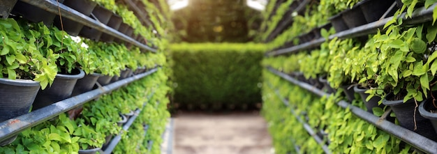 Vertical garden farming with iron rack for green wall from nature in banner size