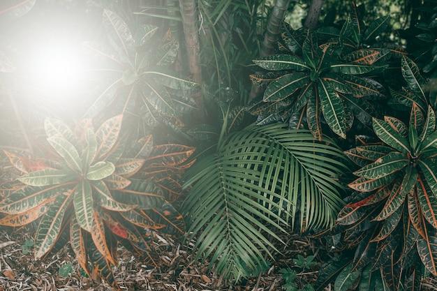 Вертикальный сад с тропическими зелеными листьями, темные тона с восходом солнца.