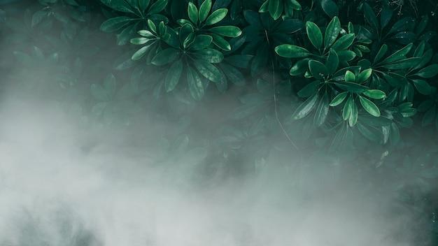 Вертикальный сад с тропическими зелеными листьями, туманом и дождем темные тона