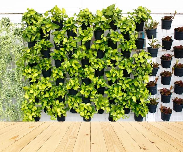 나무 바닥 배경에 많은 검은 냄비에 수직 녹색 식물 패턴