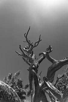 Scala di grigi verticale di vecchi alberi sotto la luce del sole
