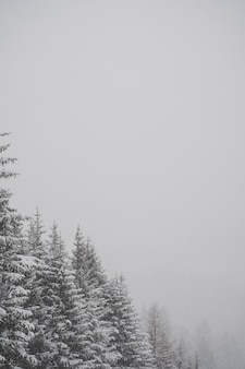 Vertical greyscale shot of snowy firs with your choice of text to be placed on the blank space
