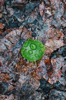 表面に水滴が付いている地面に落ちた緑の葉の垂直高角度のクローズアップショット