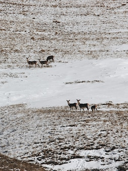 Vertical high angle shot of a group of deer in the snowy valley