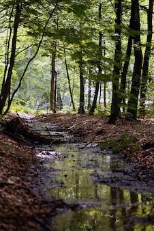 Вертикальный снимок небольшой речки в лесу днем с большим углом