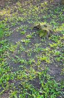 土壌に生えている新緑の植物の垂直ハイアングルショット