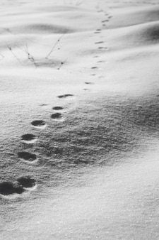 雪の上の丸い動物の足跡の垂直ハイアングルショット