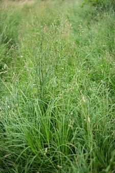 日光の下でキャプチャされた牧草地を覆う美しい緑の草の垂直ハイアングルショット