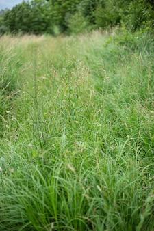 대낮에 포착된 초원을 덮고 있는 아름다운 푸른 잔디의 수직 하이 앵글 샷