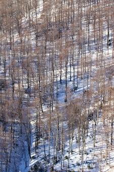 冬のクロアチア、ザグレブのメドヴェドニツァの背の高い裸木の垂直ハイアングルショット