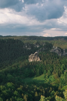 Vertical high angle shot of a rocky cliff in the middle of a green tree forest in saxon, switzerland