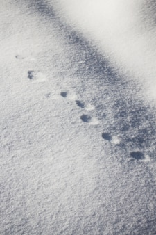 Vertical high angle shot of round animal footprints on the snow