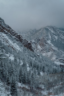 Vertical high angle shot of a spruce forest in the snowy mountains under the dark grey sky