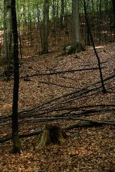 Colpo verticale alto angolo di pezzi di legno caduti a terra con foglie secche nella foresta